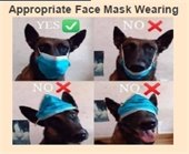 dog wearing mask